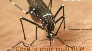 Công ty phun muỗi HCM